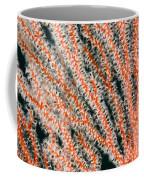 Detail Of Sea Fan, Or Gorgonian Coral Coffee Mug