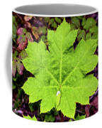 Devil's Club Leaf Coffee Mug