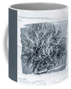 Dianthus Barbatus Bw Coffee Mug