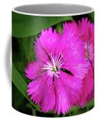 Dianthus First Love Flower Print Coffee Mug