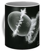Didinium Ingesting A Paramecium Coffee Mug