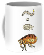 Dog Flea, Lifecycle, Illustration Coffee Mug
