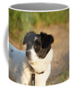 Dog On Sun Coffee Mug