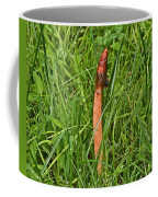 Dog Stinkhorn Mushroom - Mutinus Caninus Coffee Mug