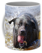 Dogs Sticks And Ponds Coffee Mug