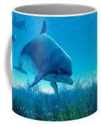 Dolphin Pod Coffee Mug