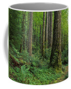 Douglas-fir Coffee Mug