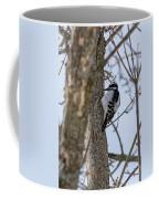 Downy Woodpecker Coffee Mug