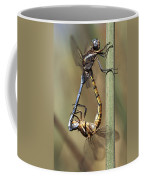 Dragonflies Mating Coffee Mug