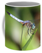 Dragonfly Captures Tiny Cockroach Coffee Mug