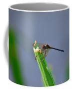 Dragonfly In Costa Rica Coffee Mug