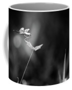 Dragonfly Is Resting On The Glass Coffee Mug