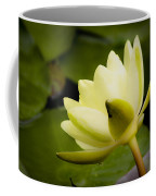Dreamy Water Lilly Coffee Mug