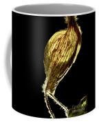 Dried Flowers With  The Slender Legs. Coffee Mug