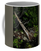 Drifted Tree Coffee Mug