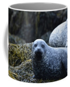 Dunvegan Loch With A Group Of Harbor Seals Coffee Mug