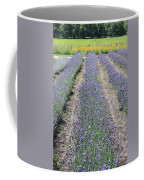 Dutch Lavender Field Coffee Mug