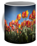 Dutch Tulips Second Shoot Of 2015 Part 2 Coffee Mug