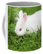 Dwarf White Bunny Spring Scene Coffee Mug