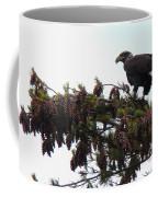 Eaglet In Pines Coffee Mug
