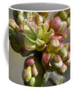 Early Cherry Blossom Coffee Mug
