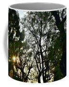 Early Evening Sunset Through The Trees Coffee Mug