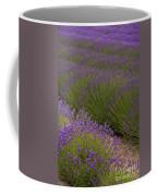 Early Morning Lavender Coffee Mug