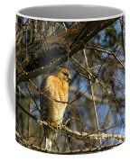 Early Morning Still Hunting  Coopers Hawk Art Coffee Mug