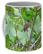 Eastern Phoebe - Sayornis Phoebe  Coffee Mug