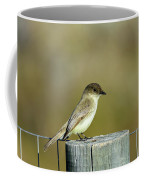 Eastern Phoebe At Falcon State Park Of Texas Coffee Mug