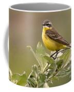 Eastern Yellow Wagtail Coffee Mug