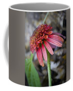 Echinacea Hot Papaya Coffee Mug