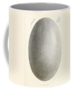 Egg Of Dinornis, Giant Moa, Cenozoic Coffee Mug