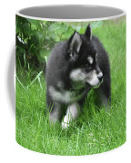Eight Week Old Alusky Puppy On A Summer Day Coffee Mug
