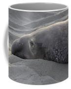 Elephant Seal 5 Coffee Mug