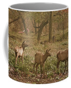 Elk In The Early Morning Coffee Mug
