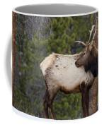 Elk Looking Back Coffee Mug