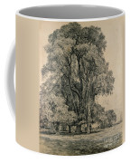 Elm Trees In Old Hall Park Coffee Mug by John Constable