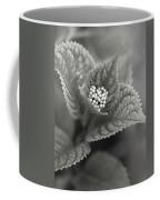 Emerging Hydrangea Coffee Mug