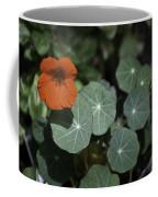 Empress Of India Nasturtium Coffee Mug
