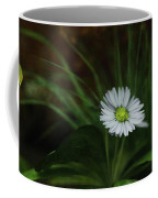 English Daisy Coffee Mug