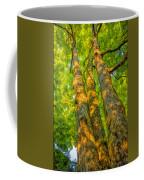 Enlightened Trees Coffee Mug