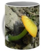 Entoloma Incanum Coffee Mug