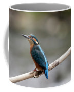 Eurasian Kingfisher Coffee Mug