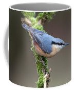 European Nuthatch Coffee Mug
