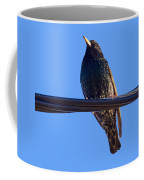 European Starling Trasparent Background Coffee Mug