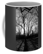 Evening Sun Through The Trees Coffee Mug