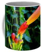 Evolution Of The Trumpet Flower I Coffee Mug