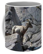 Ewe Bighorn Sheep Coffee Mug