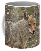 Face Of The American Coyote Coffee Mug